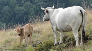 1ère pause pour faire connaissance avec le troupeau