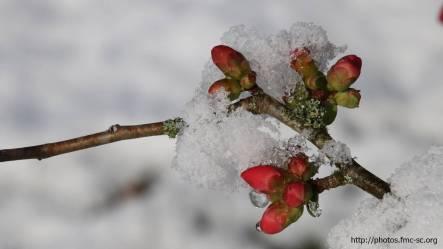 2018_02_lombreuil-neige (10)
