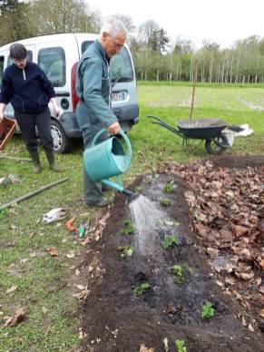 et voici les premières plantations