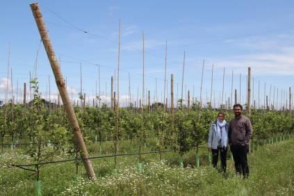Ricardo et Sofia F dans leur plantation de pommiers
