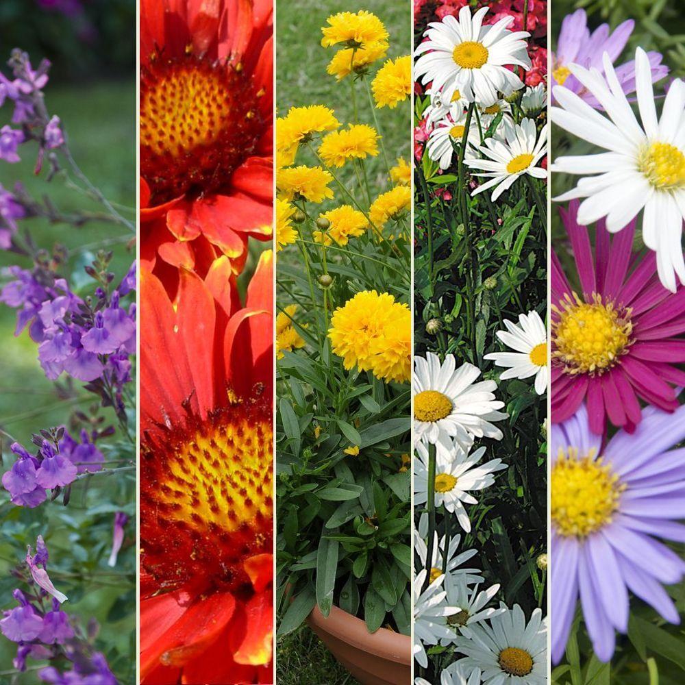 kit de vivaces massif fleuri
