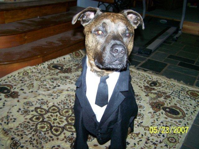 Tuxper20003 Dog Costumes For Pitbulls