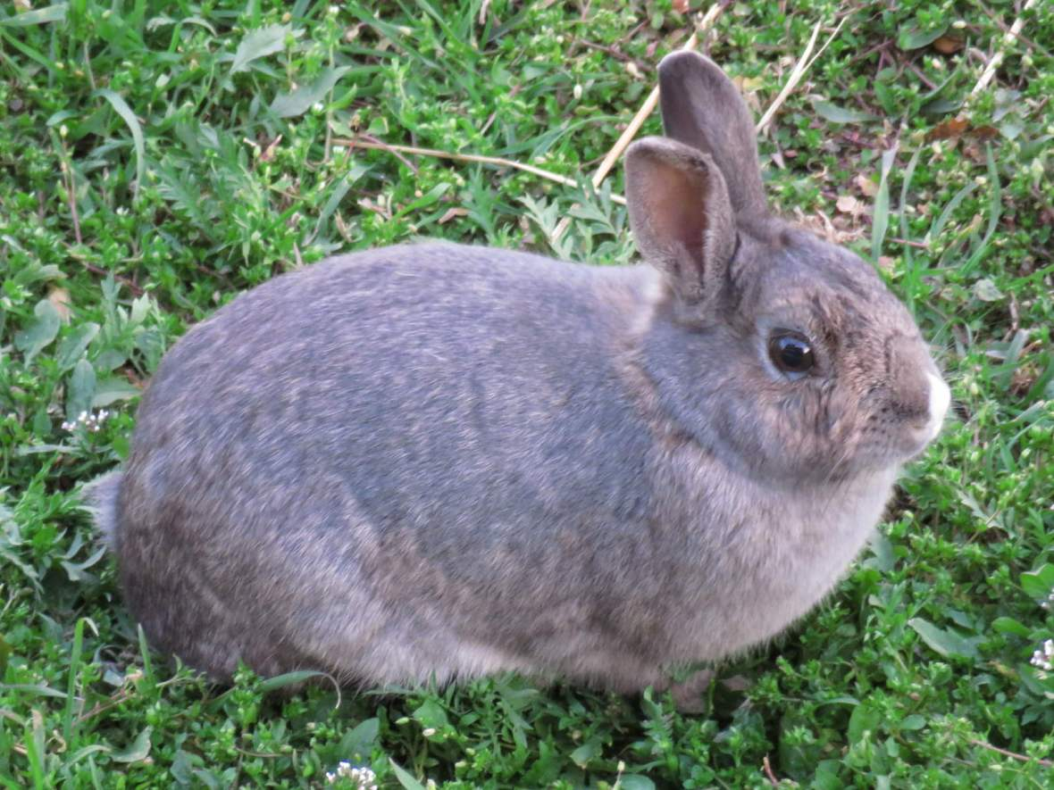Rabbit on grassy background