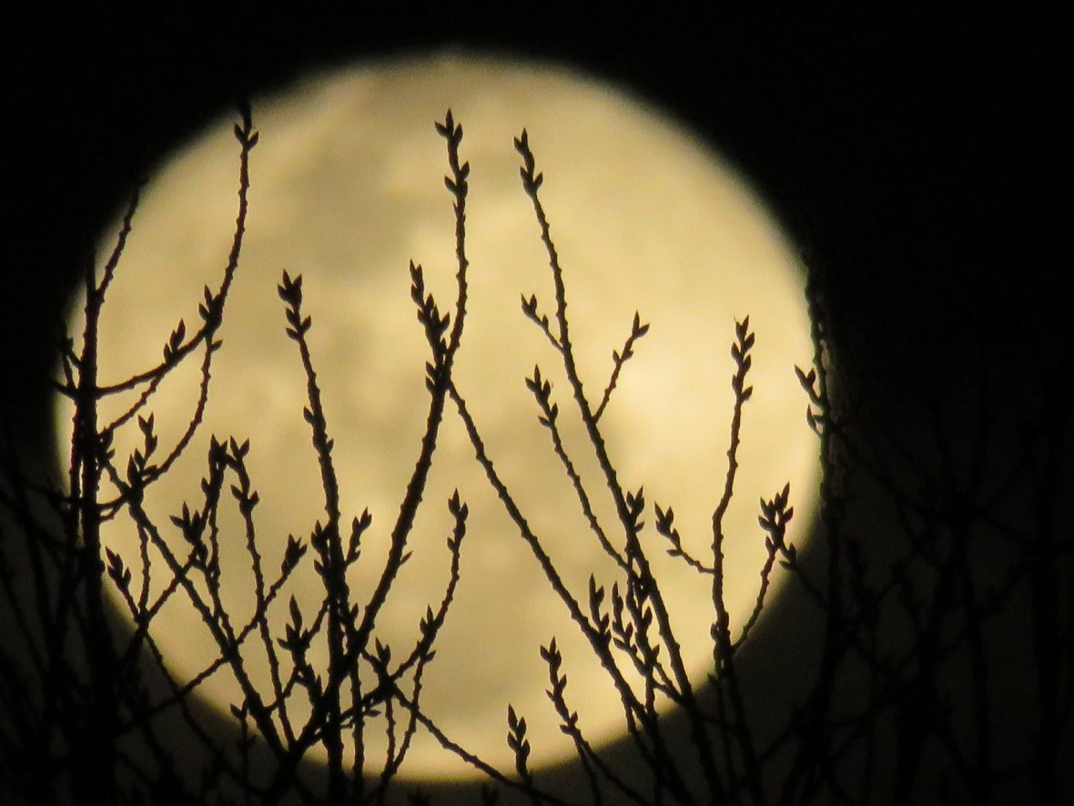 Full moon with branches in foreground