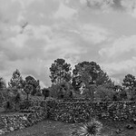 Cantona LanoraMueller-_MG_0283