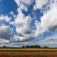 The Place to be in Spring - Wooden Shoe Tulip Fields