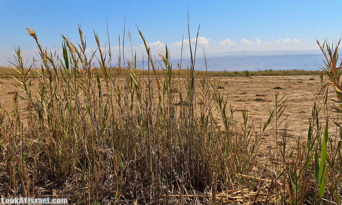 Эйнот Цуким   LookAtIsrael.com - Фото путешествия по Израилю
