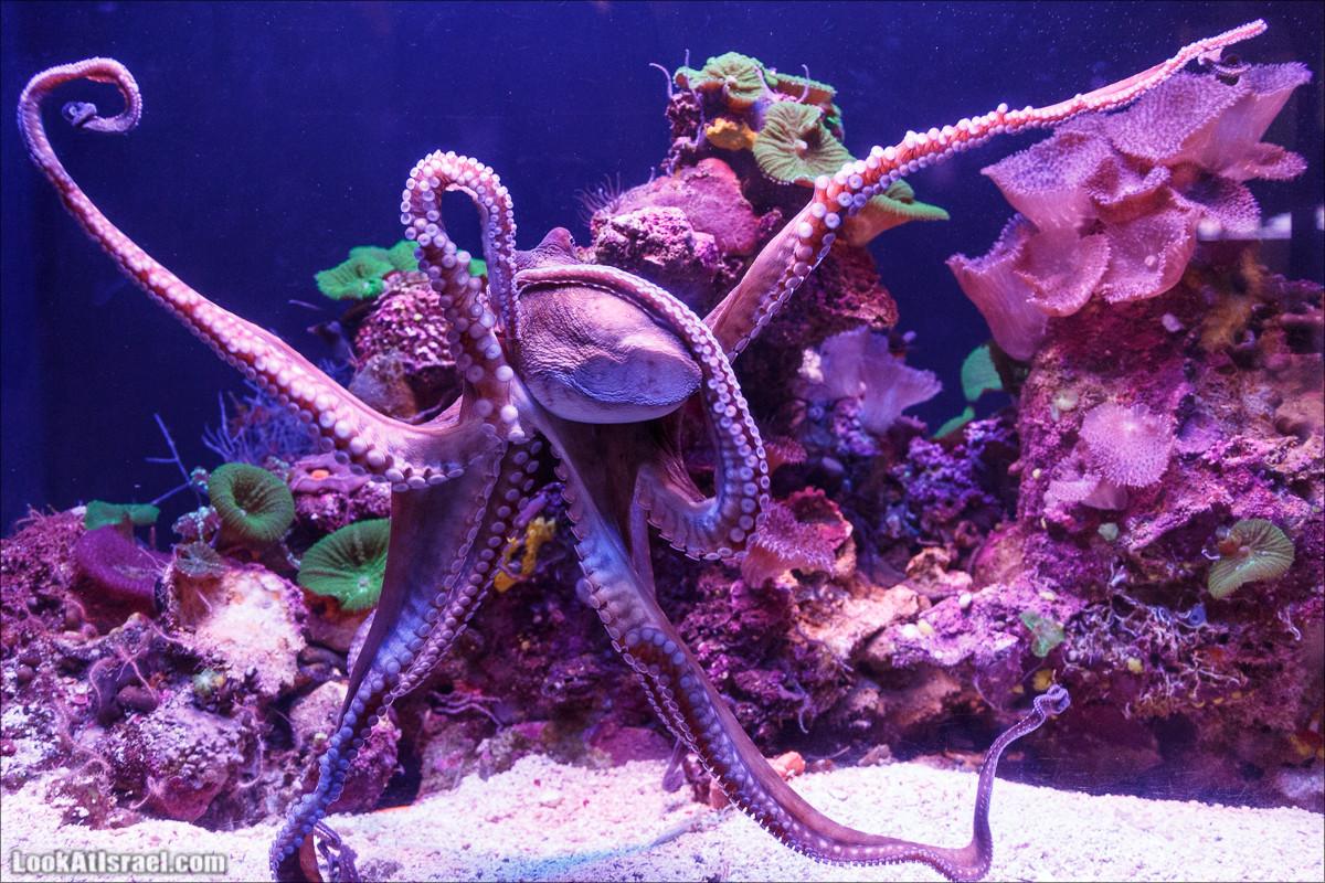 Подводная обсерватория Океанариум, Эйлат | LookAtIsrael.com - Фото путешествия по Израилю