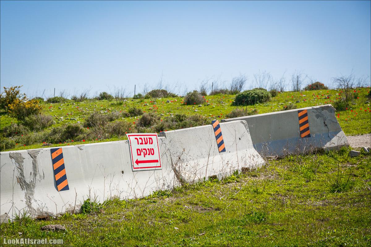 Зимнее путешествие на джипах по полям и лесам горы Кармель | LookAtIsrael.com - Фото путешествия по Израилю