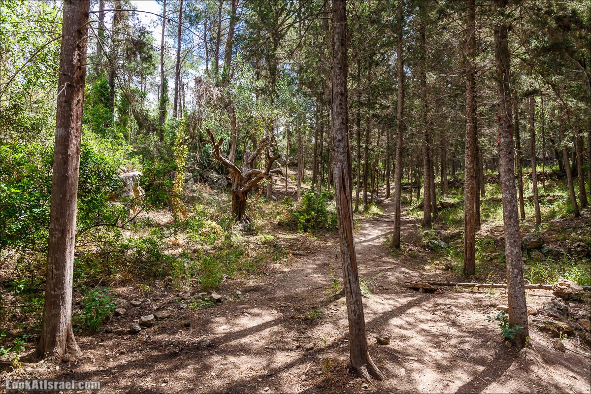 Прогулка по лесу Офер на горе Кармель | LookAtIsrael.com - Фото путешествия по Израилю