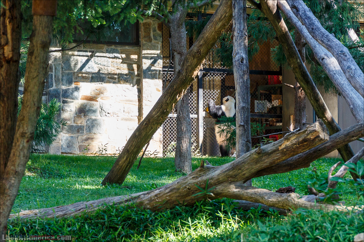 Зоопарк в Вашингтоне | LookAtAmerica.com - Большое Американское путешествие LookAtIsrael.com