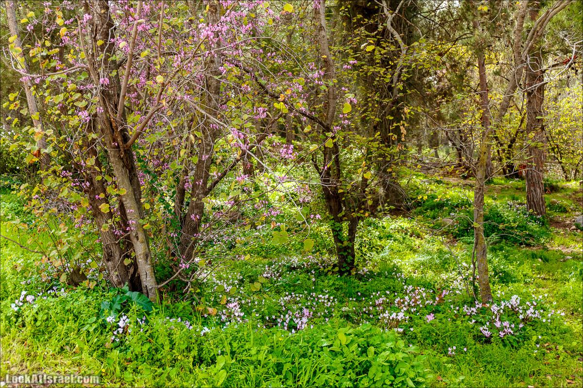 Цветение в парке Неот Кдумим   LookAtIsrael.com - Фото путешествия по Израилю