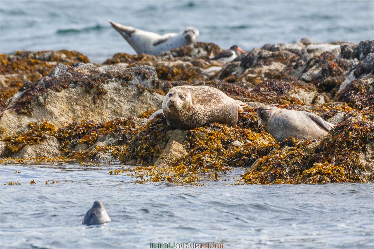 Seafari к морским мимишным собачками
