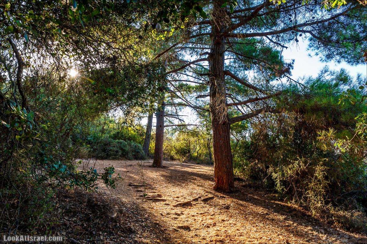 Утров в лесу на горе Мерон   LookAtIsrael.com - Фото путешествия по Израилю и не только...