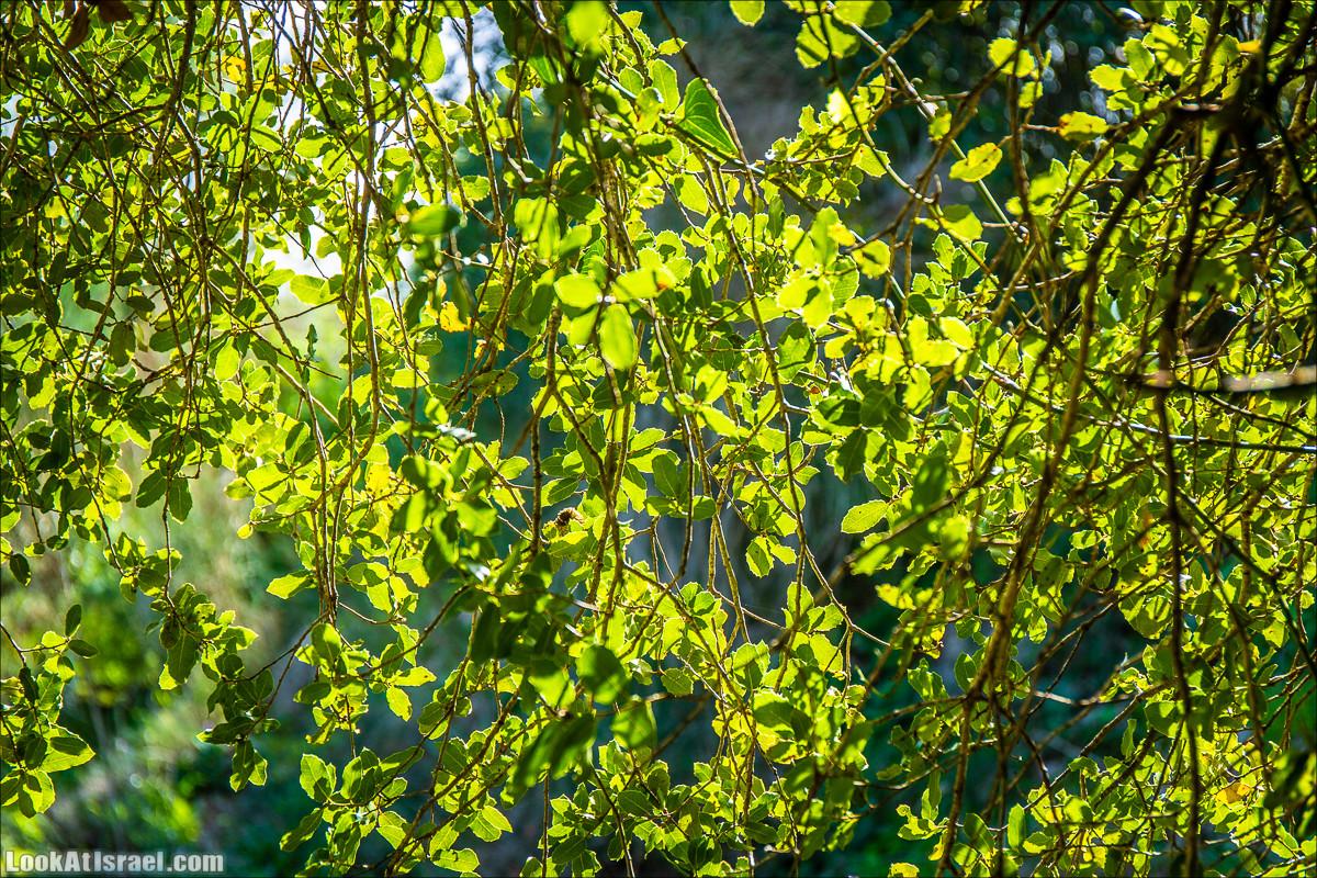 Зима в парке библейской природы Неот Кдумим | חורף בנאות קדומים | LookAtIsrael.com - Фото путешествия по Израилю