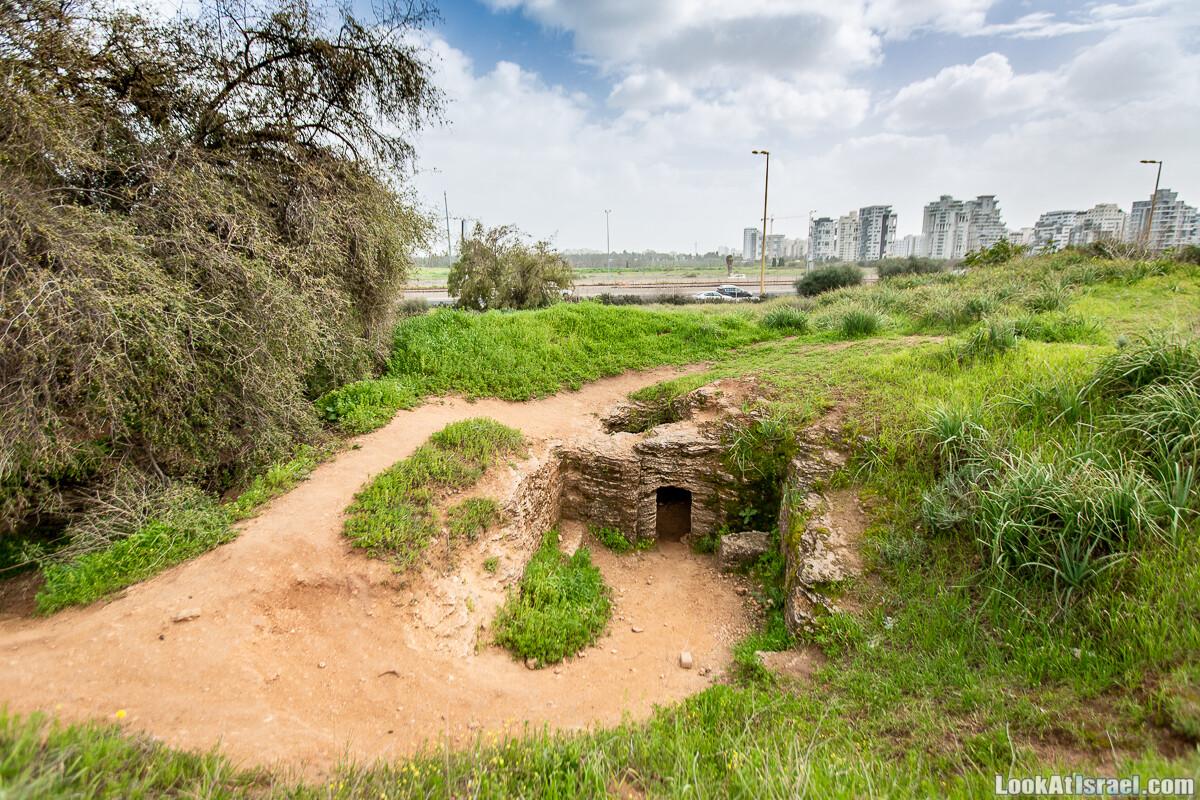 Афека - тель-авивское цветение, кладбище самаритян и реабилитация деревьев