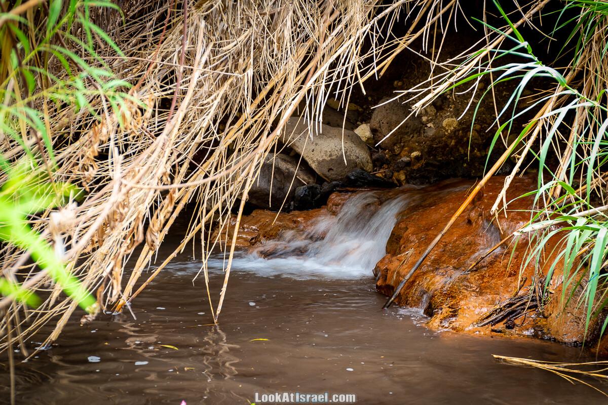 Белые водопады пустыни | המפלים הלבנים | LookAtIsrael.com - Фото путешествия по Израилю