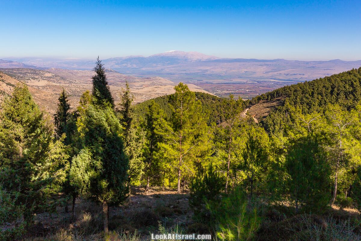 Лес Бирия   LookAtIsrael.com - Фото путешествия по Израилю