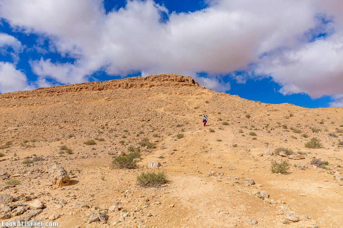 Зимнее цветение нарциссов в пустыне Негев (Нахаль Хацац) | Narcissuses of Negev desert | LookAtIsrael.com - Фото путешествия по Израилю