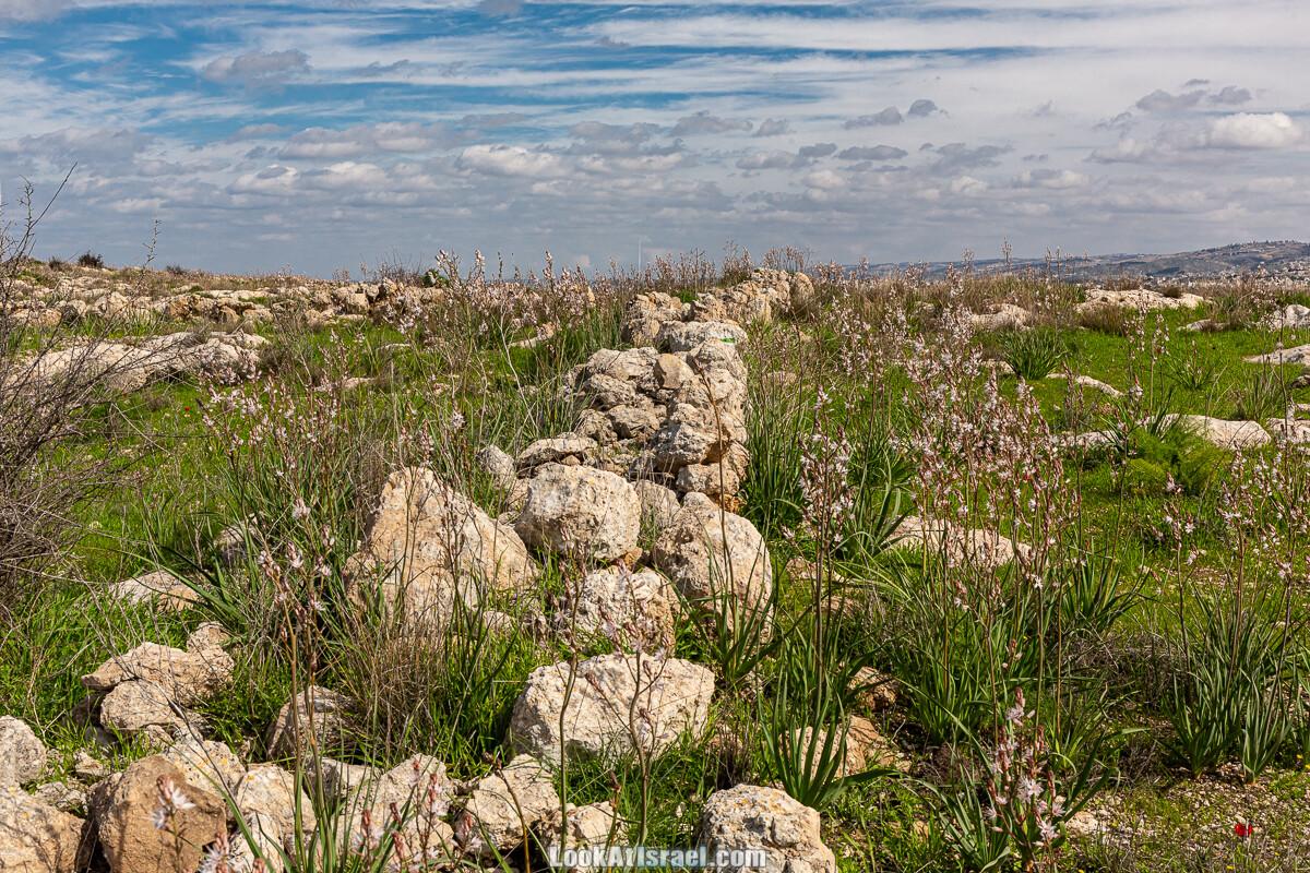 Цветение и археология - Тель Этон, Хирбет Гамар (Гомер), Тель Мирсим | LookAtIsrael.com - Фото путешествия по Израилю