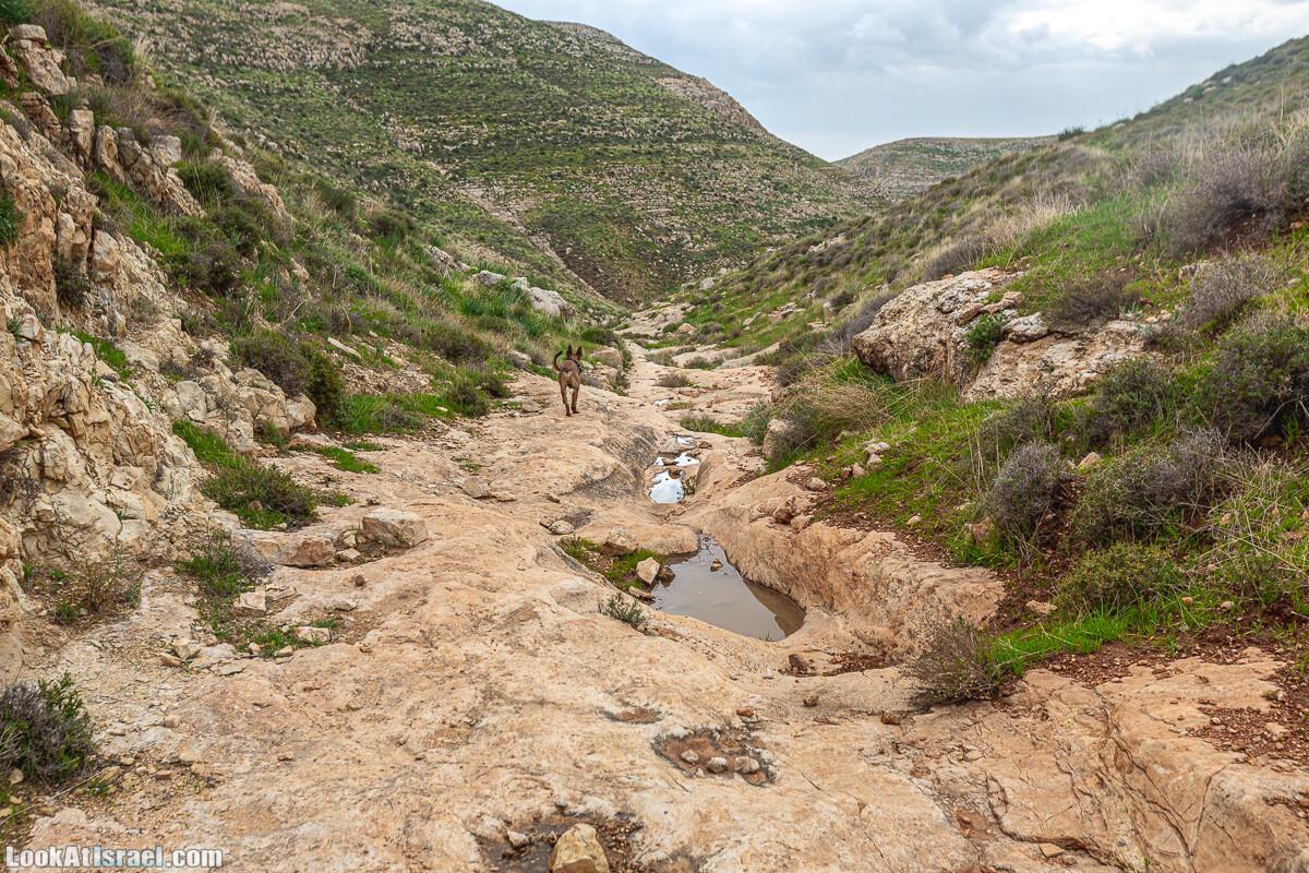 Ущелья Вахиха (Вахида) - от Кохав а-Шахар к Мевуот Йерихо | ואדי ואחיחה | LookAtIsrael.com - Фото путешествия по Израилю