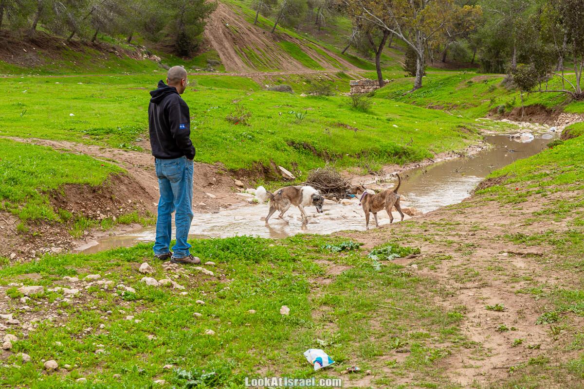 Цветение в на Гивот Гораль и окрестностях | LookAtIsrael.com - Фото путешествия по Израилю