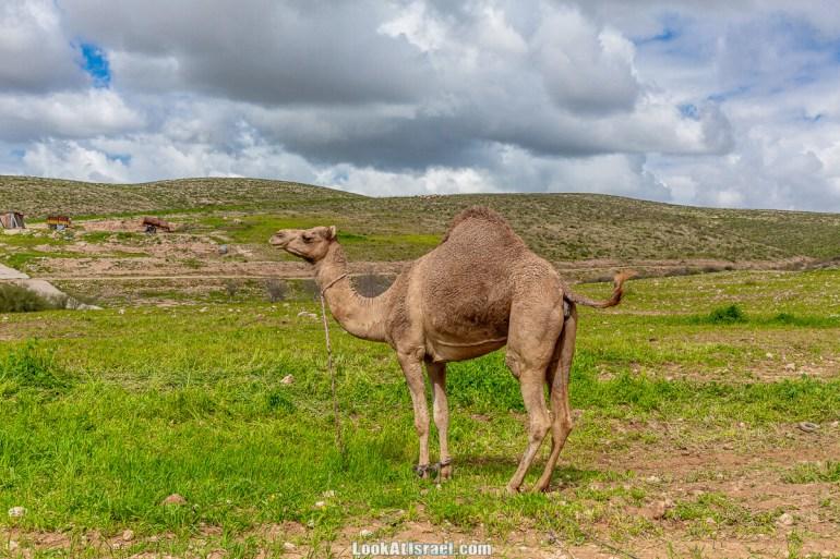 Цветение в на Гивот Гораль и окрестностях   LookAtIsrael.com - Фото путешествия по Израилю