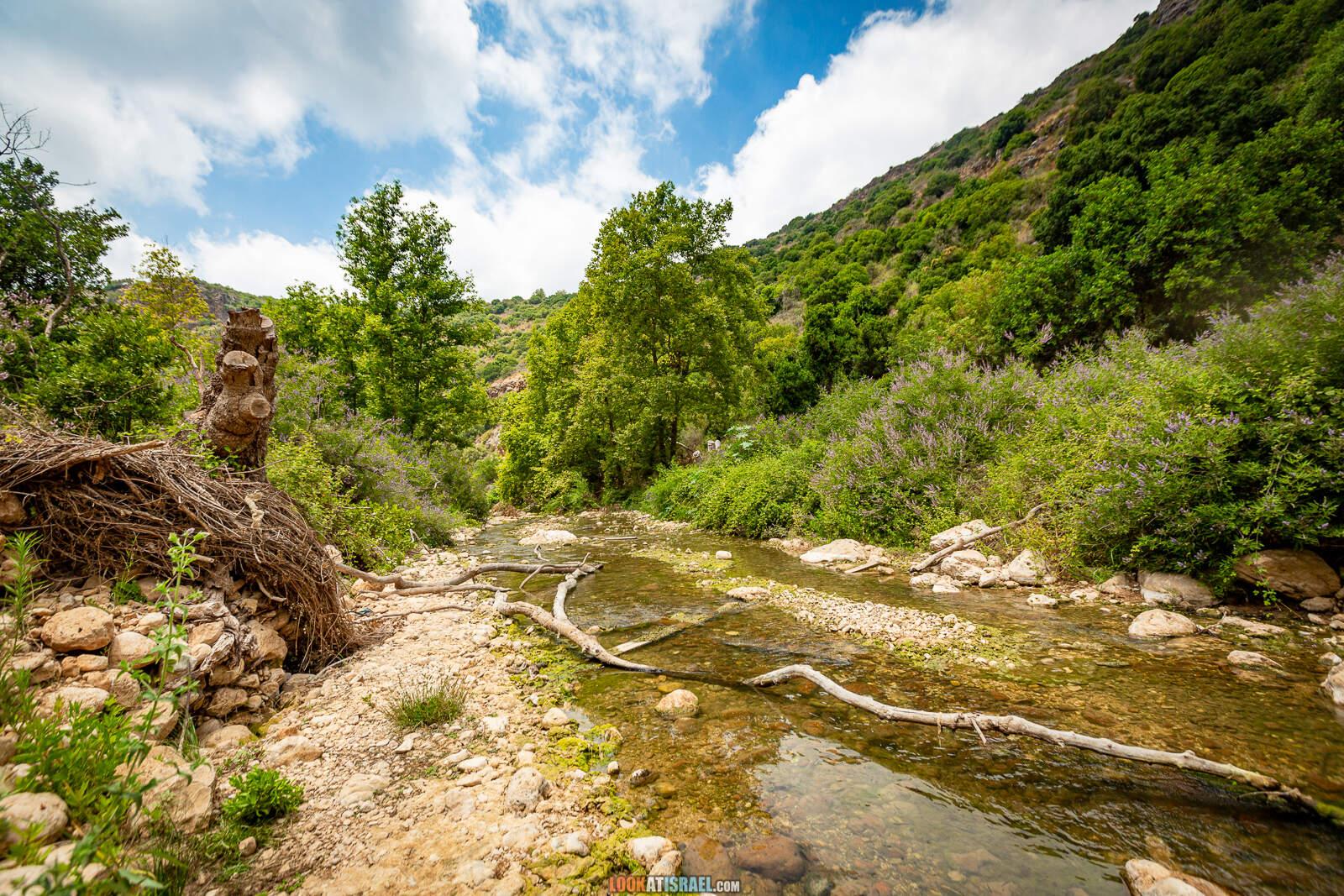 Поход по ручью Кзив. от источника Эйн Харделит до источника Эйн Тамир