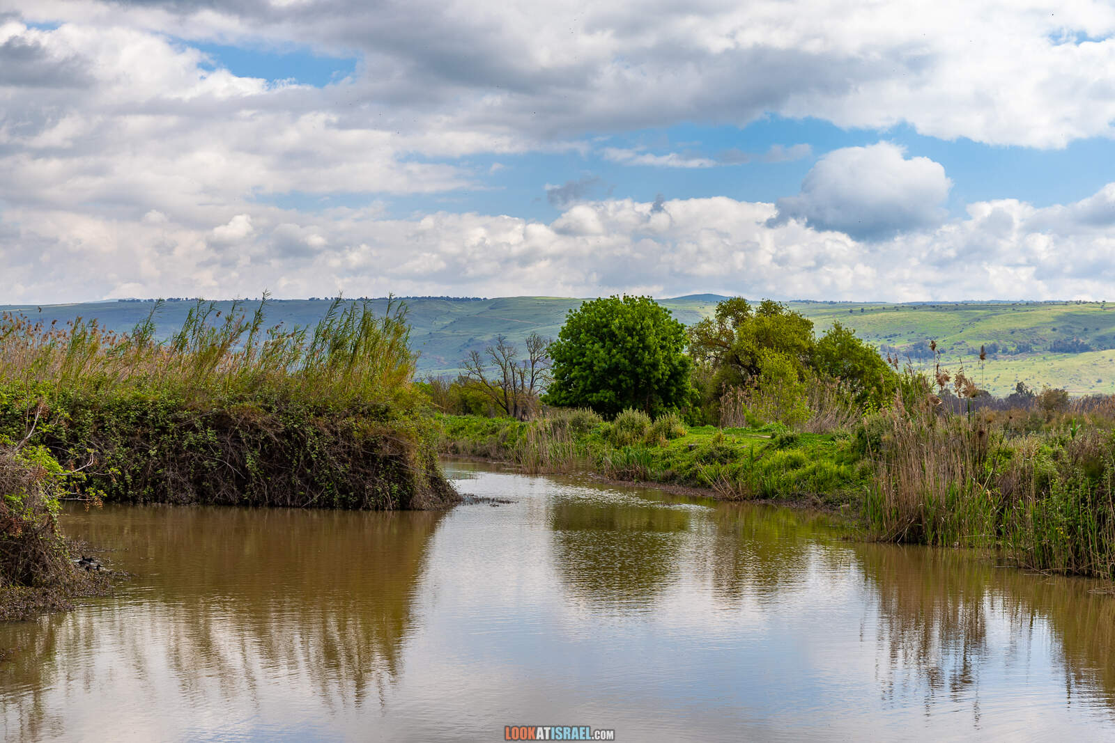 Заповедник а-Хула - Hula nature reserve - שמורת החולה - LookAtIsrael.com - Фото путешествия по Израилю