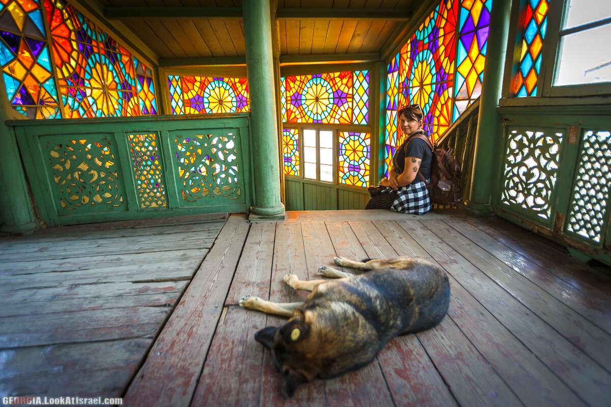 Собаки   LookAtIsrael.com - Фото путешествия по Израилю