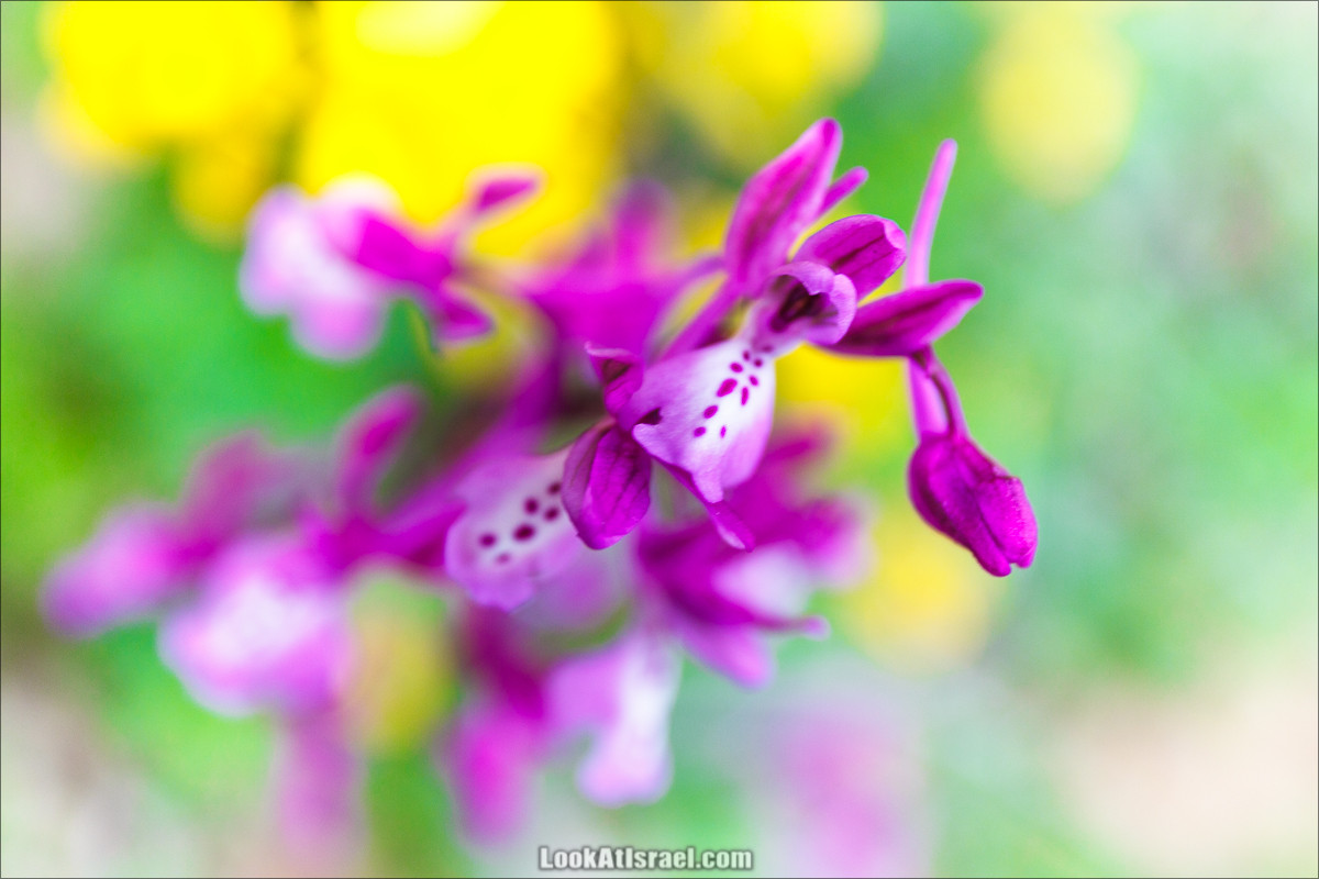 Дикая орхидея и её друзья