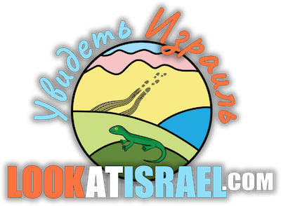 LookAtIsrael.com — Увидеть Израиль