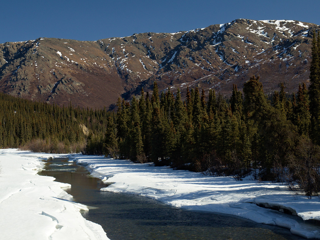 The view north from the Sanctuary River bridge in Denali National Park.