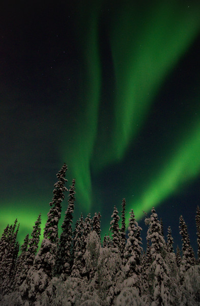 Aurora borealis dancing over boreal forests
