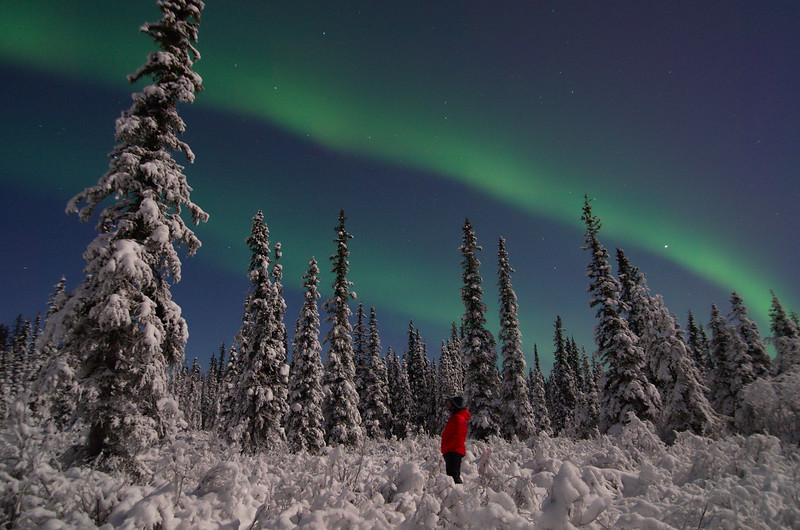 A person standing in a forest watching the northern lights