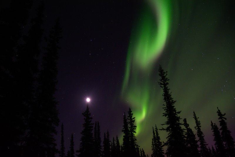 Aurora borealis and the moon over a silhouetted forest