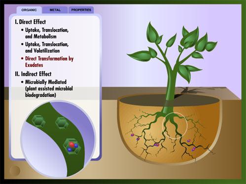 parts of plants essay