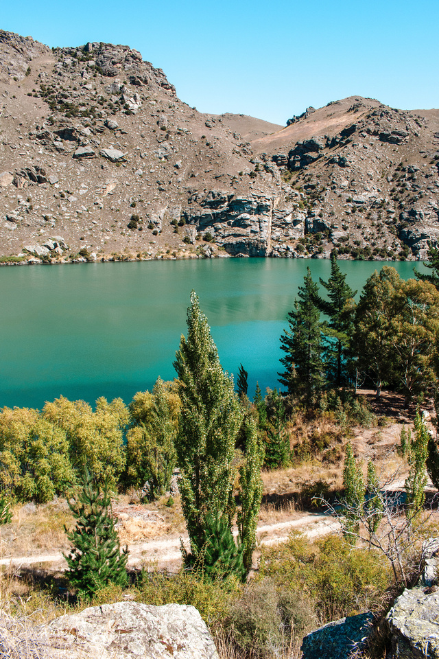 Turquoise blue-green water in the reservoir between Clyde Dam and the city of Cromwell, New Zealand, contrasts with dry, barren hillsides beyond. In the foreground, a dirt road cuts through stands of trees that line the reservoir.