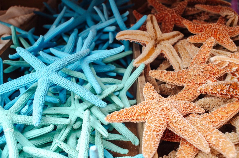 Dried starfish for sale at Coronado, near San Diego, California, USA.