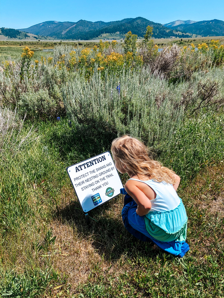 A young girl looks at a sign about nesting Trumpeter Swans near Henrys Lake, at the inlet to the lake.  Idaho's Henrys Lake State Park sits near the Montana border, just 15 miles from the West Gate to Yellowstone National Park.  Reeds and other marshland vegetation grows in the foreground, and the Targhee National Forest and mountain range are visible in the distance.