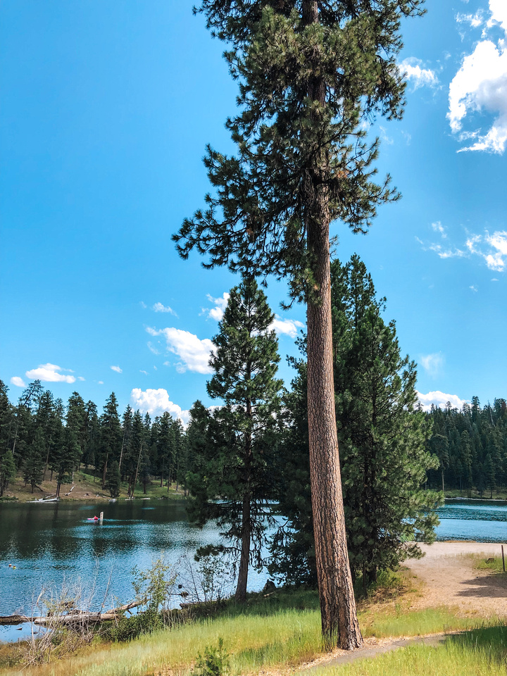 A wide-angle view of Oregon's Magone Lake, near John Day, Oregon.  Enormous pine trees overshadow the walking path that encircles the lake.