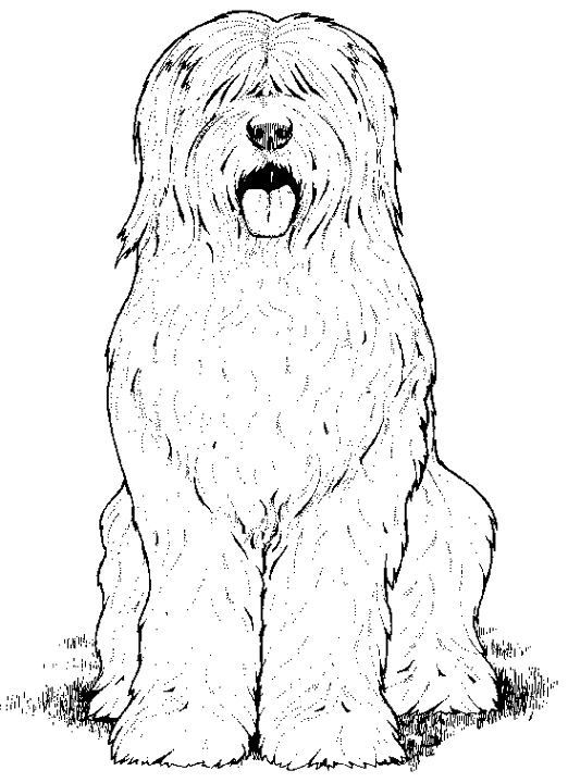dog breed coloring pages cooloring com