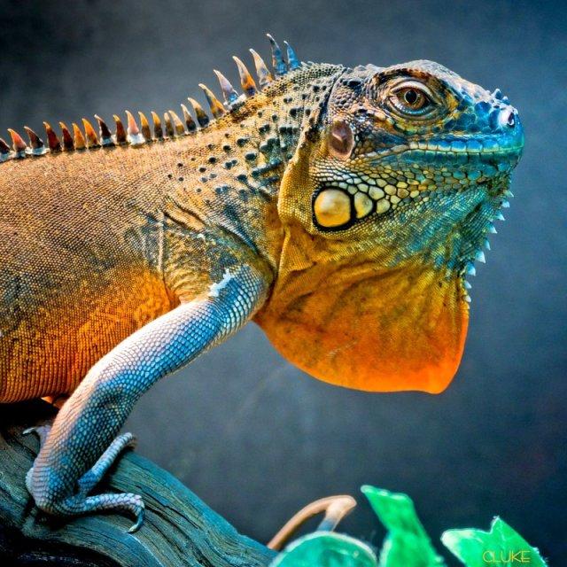 https://i2.wp.com/photos.pouryourheart.com/wp-content/uploads/2018/12/Big-Bad-Lizard.jpg?w=640