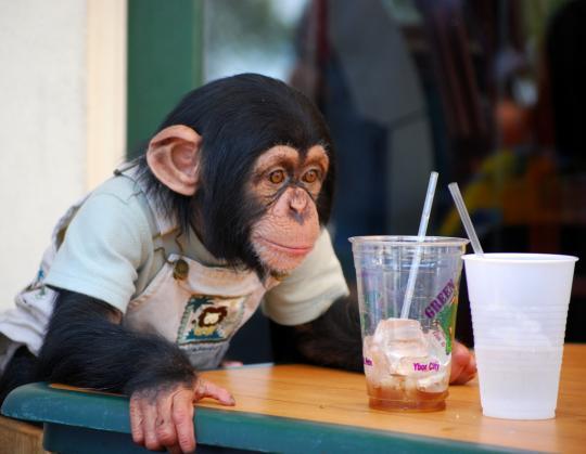 https://i2.wp.com/photos.pouryourheart.com/wp-content/uploads/2018/12/Chimpanzee.jpg?w=640