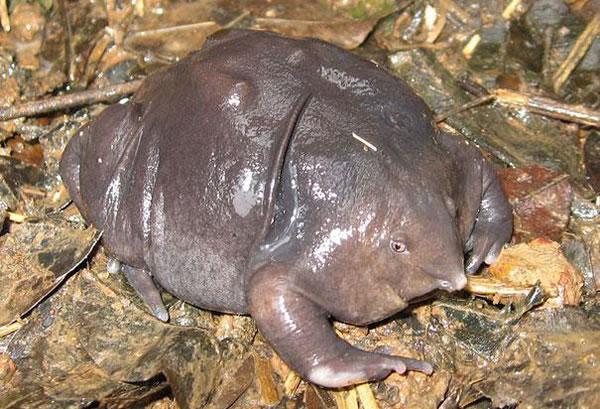 https://i2.wp.com/photos.pouryourheart.com/wp-content/uploads/2018/12/Indian-Purpule-Frog.jpg?w=640