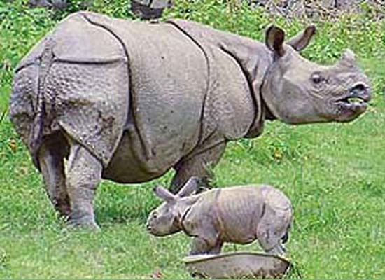 https://i2.wp.com/photos.pouryourheart.com/wp-content/uploads/2018/12/Kaziranga-National-Park.jpg?w=640