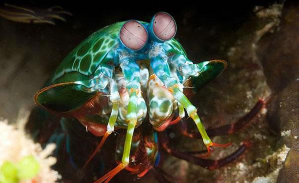 https://i2.wp.com/photos.pouryourheart.com/wp-content/uploads/2018/12/Mantis-Shrimp.jpg?w=640