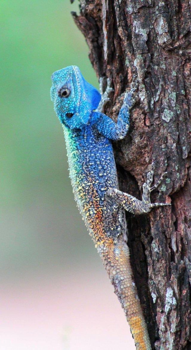https://i2.wp.com/photos.pouryourheart.com/wp-content/uploads/2018/12/beautiful-Lizard.jpg?w=640