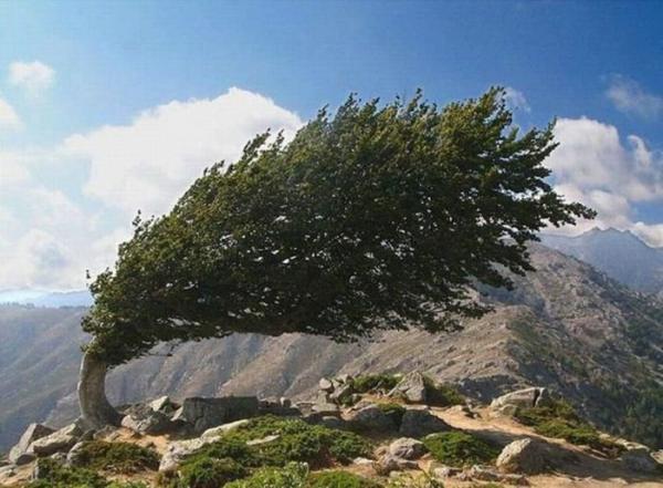 https://i2.wp.com/photos.pouryourheart.com/wp-content/uploads/2018/12/beautiful-and-amazing-trees-nature-pics.jpg?w=640