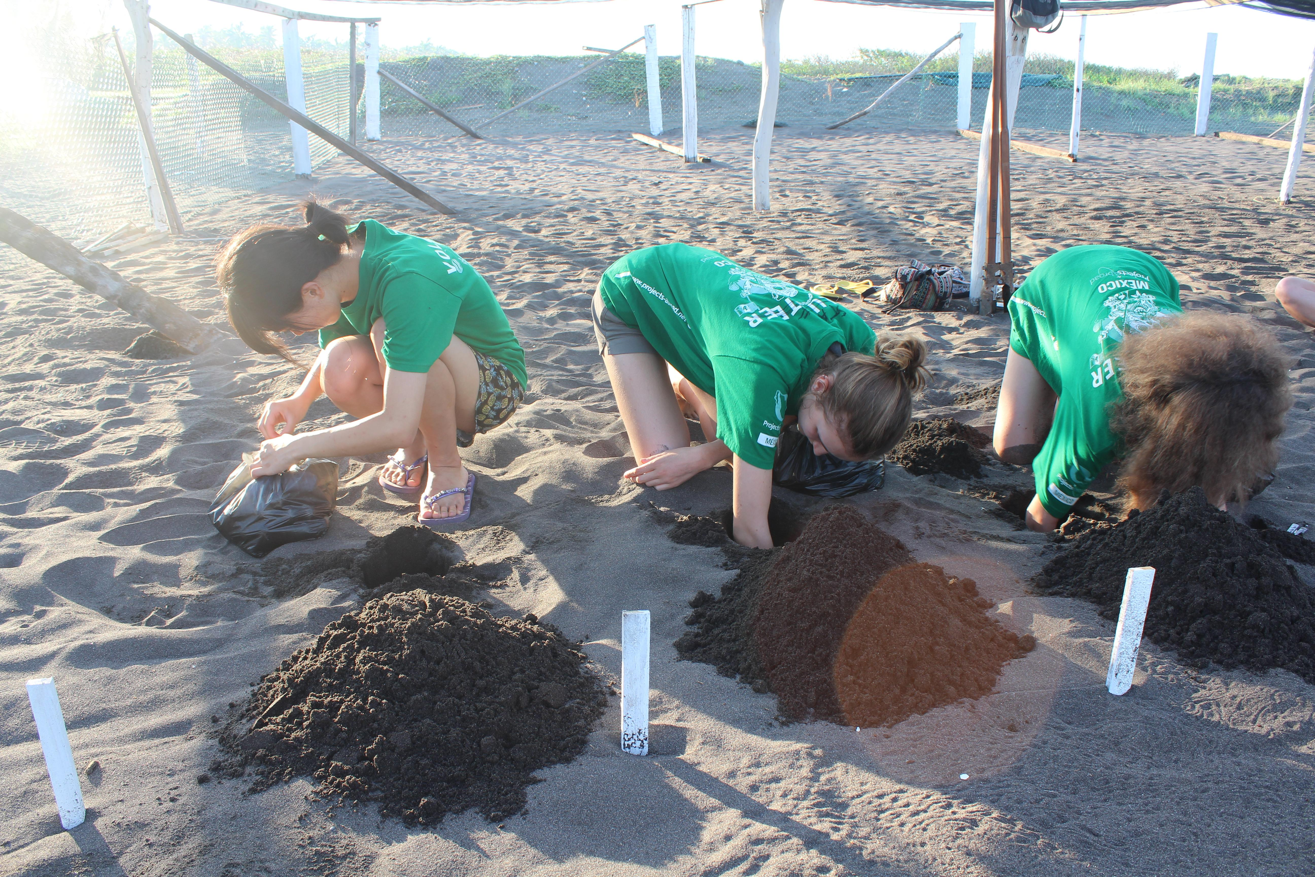 Spanish Amp Turtle Conservation In Mexico For Teens